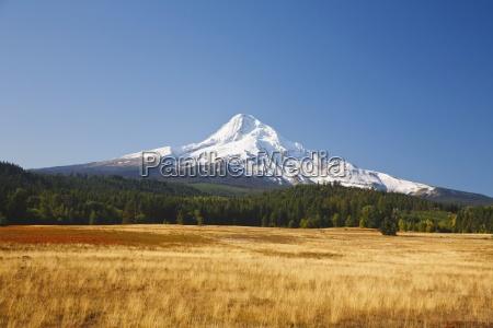 trae traeer bjerge mark horisontal udendore