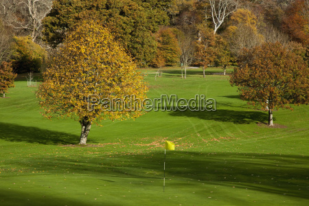 trees on a golf course kenmare