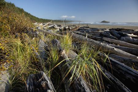 drift logs pile up along long