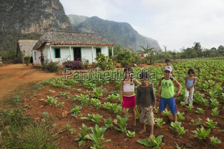 children in a tobacco field in
