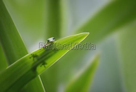 blad dyr krybdyr firben se syn