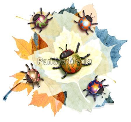 blad grafik dyr insekt insekter blade