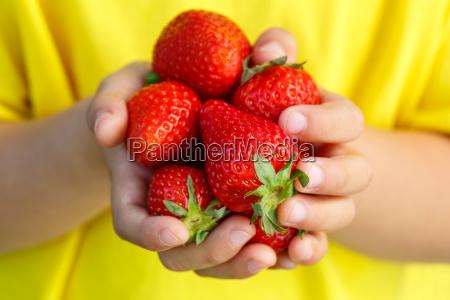 jordbaer frugter baer jordbaer frugt baer