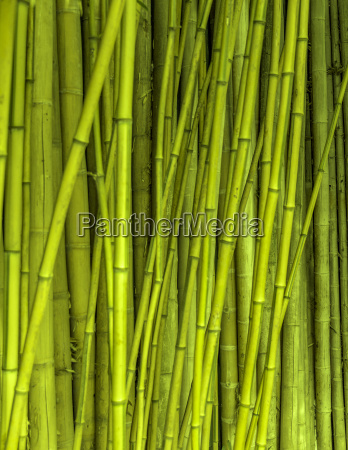 blad detalje closeup close up gron