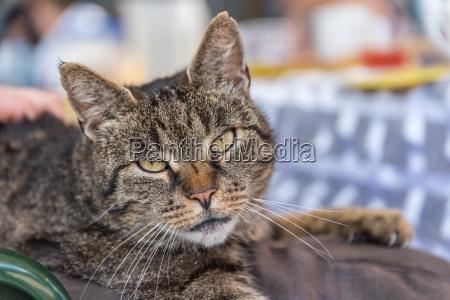 cat looks into camera portrait