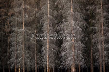 magiske morke skov
