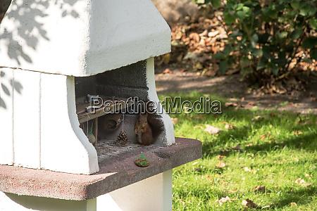 egern fodring fodring jorden solsikkefro dyreliv