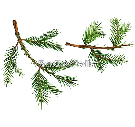 set of spruce branches