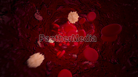 lymphocytes and red blood cells flowing