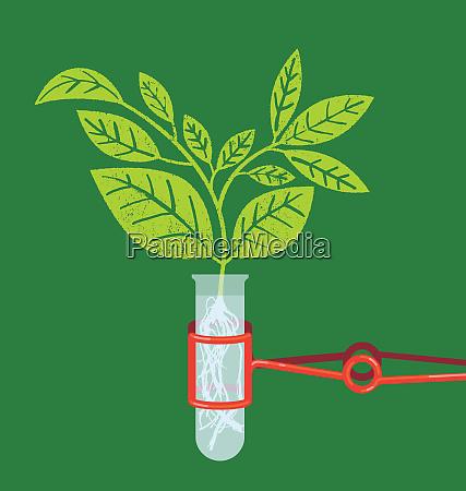 plant seedling growing in test tube