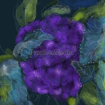 close up of purple cauliflower