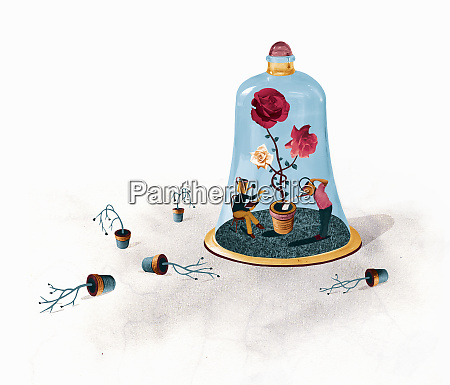people, successfully, caring, for, healthy, rose - 26012671