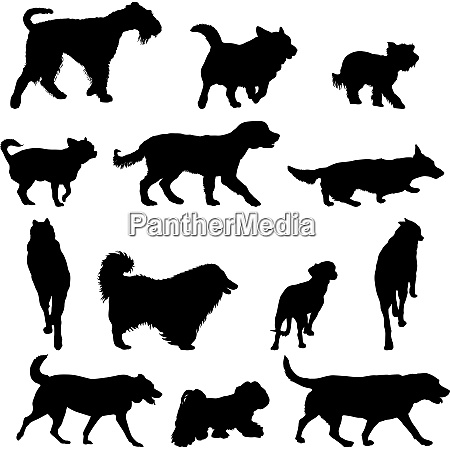 set silhouette black dog on a