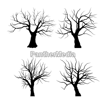 set sketch of dead tree without