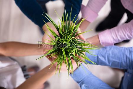 forretningsfolk holding green plant