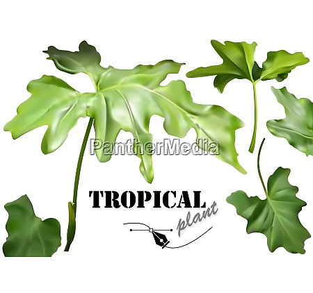 green tropical leaves set