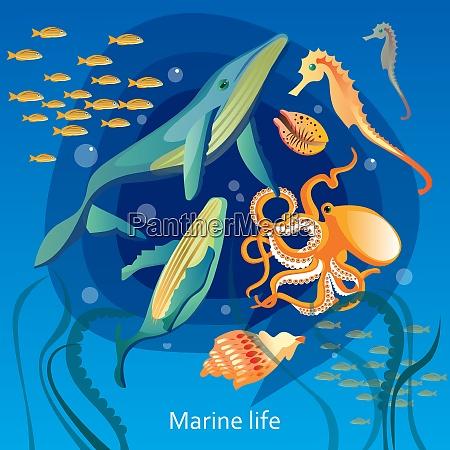 ocean underwater life baggrund hav underwater