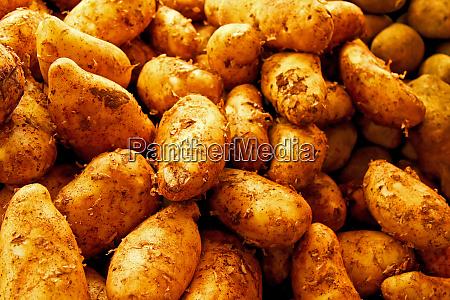 snavs kartoffel