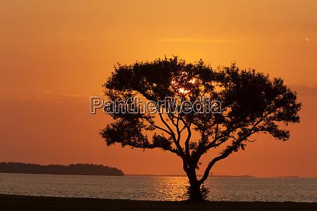 usa, florida, everglades, national, park, flamingo, campingplads., træ, silhuet - 27339964