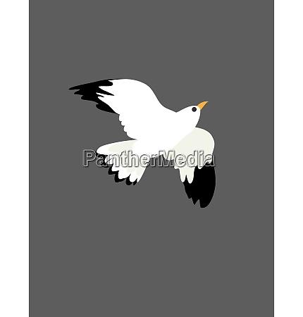 portraet af fuglen mage pa flight