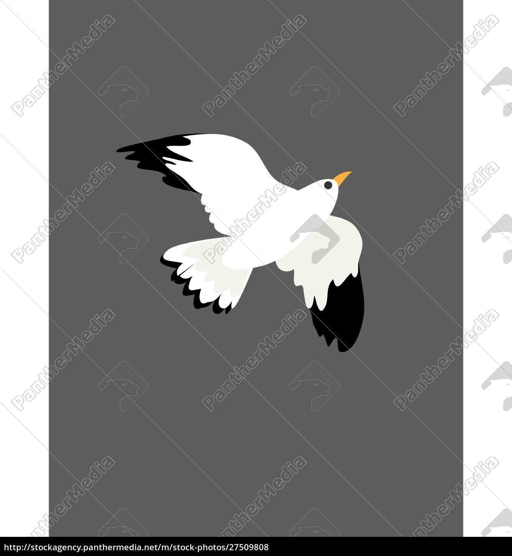 portræt, af, fuglen, måge, på, flight, vektor, eller - 27509808