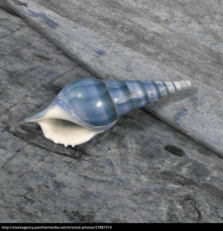 natutical, shell, stadig, liv. - 27887319