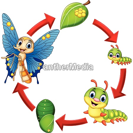 illustration af sommerfuglens livscyklus