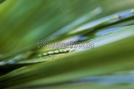 naerbillede af vanddraber pa gronne planteblade