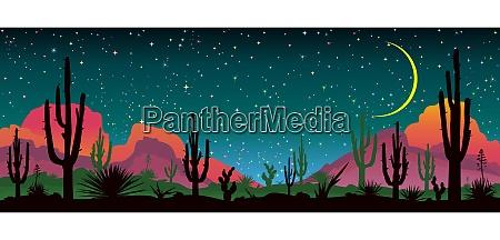 nat stjernehimmel over den mexicanske orken