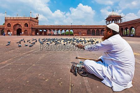 muslimsk mand fodre duer i indien