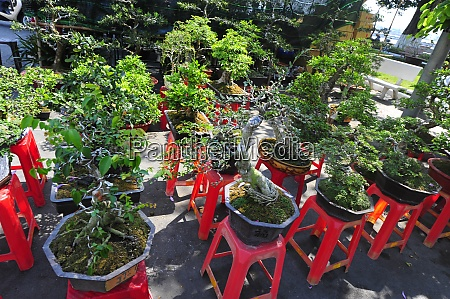 bonsai, kultur, i, vietnam - 28846626