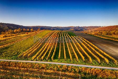 smukke vinmarker i weinviertel niederoesterreich