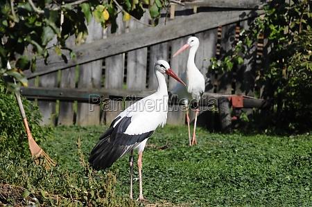 stork, station, for, injured, animals - 29576648