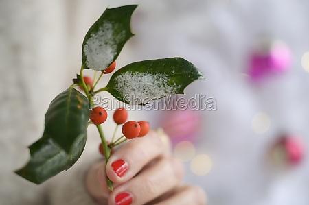 hand holder kristtorn ved juletrae