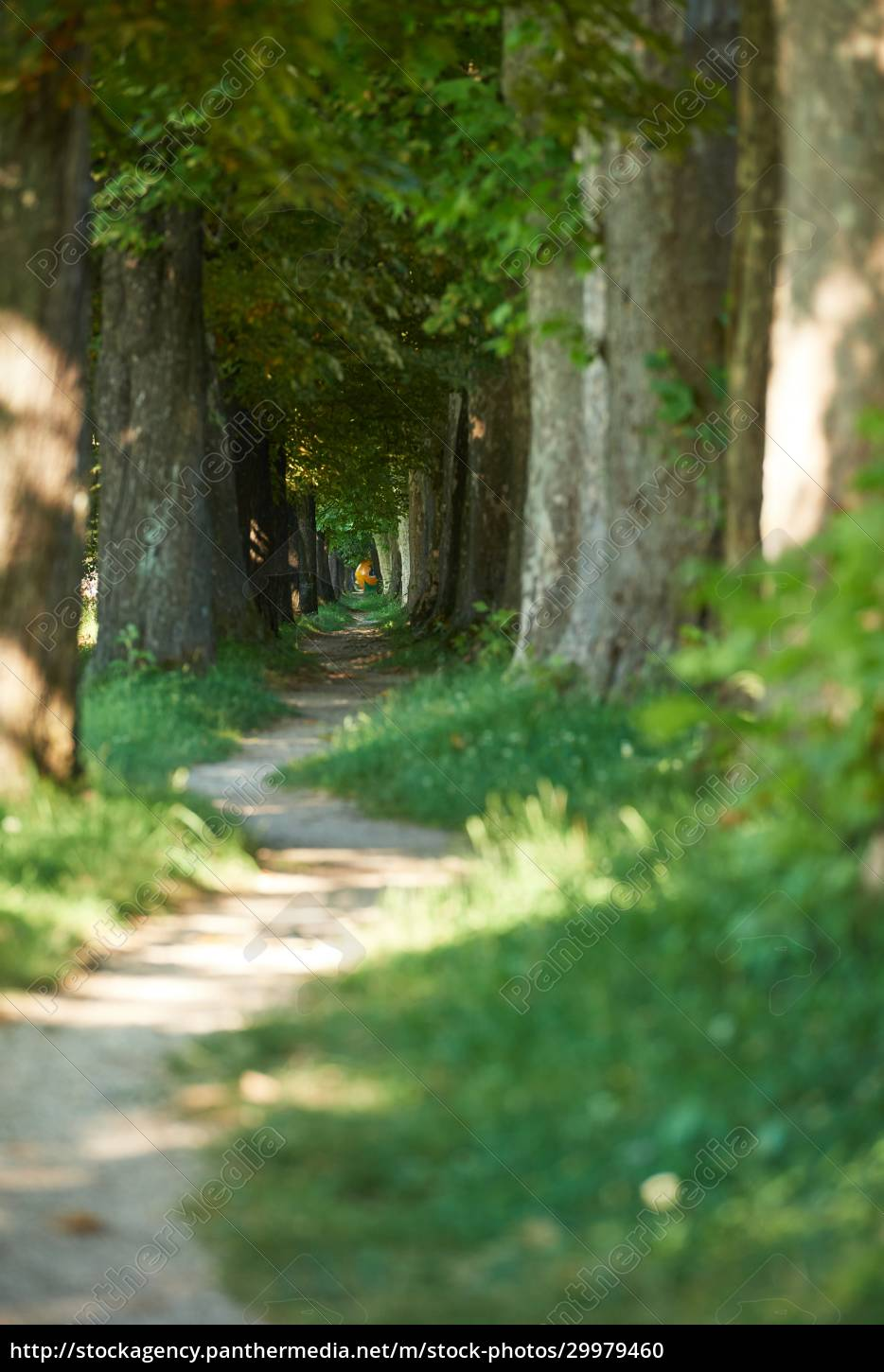 country, road, trought, tree, , alley - 29979460
