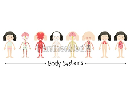body systemer af menneskelige pige illustration